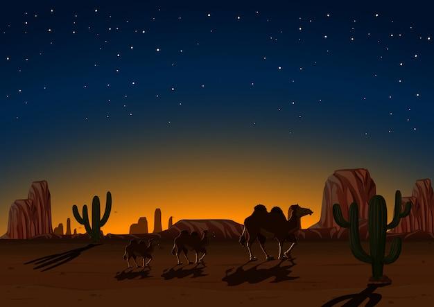 Silhouette chameaux dans le désert de nuit