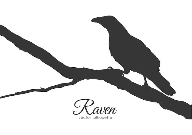 Silhouette de corbeau assis sur une branche sèche.