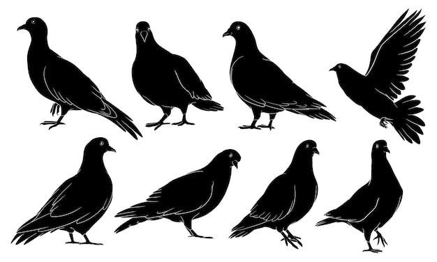 Silhouette dessinée à la main de pigeon
