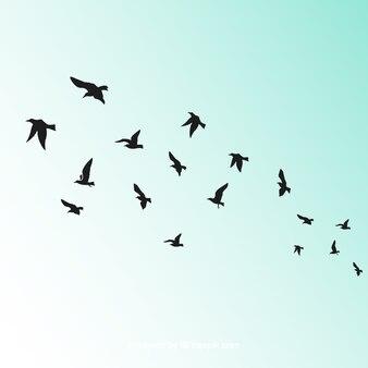 Oiseau Vecteurs Et Photos Gratuites