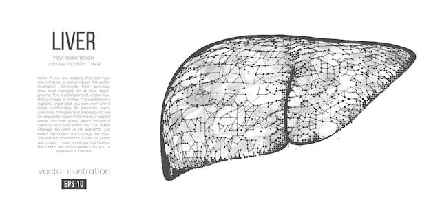 Silhouette polygonale abstraite du foie