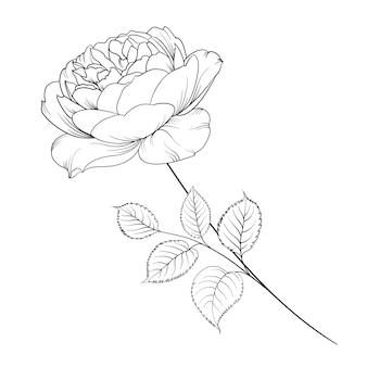 Silhouette De Rose Isolé Sur Blanc. Vecteur gratuit