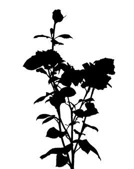 Silhouette de rose noir et blanc. illustration vectorielle. eps10
