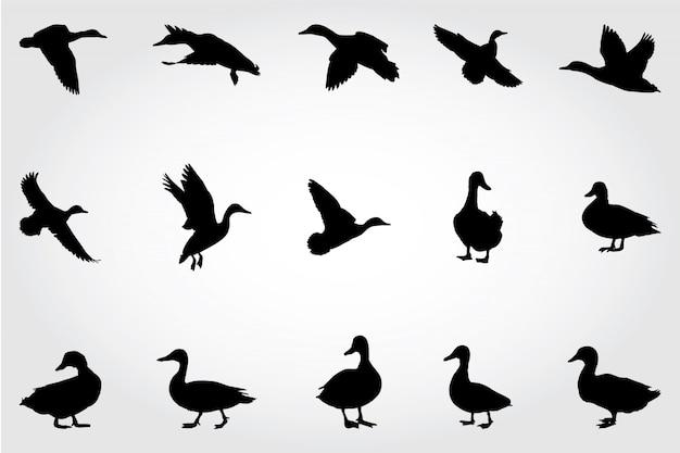 Silhouettes de canard