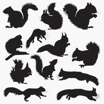 Silhouettes d'écureuil