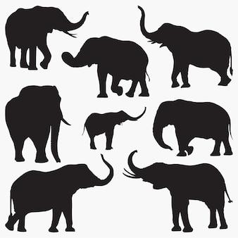 Silhouettes d'éléphant2