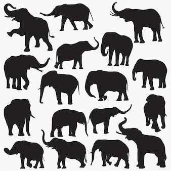 Silhouettes d'éléphant