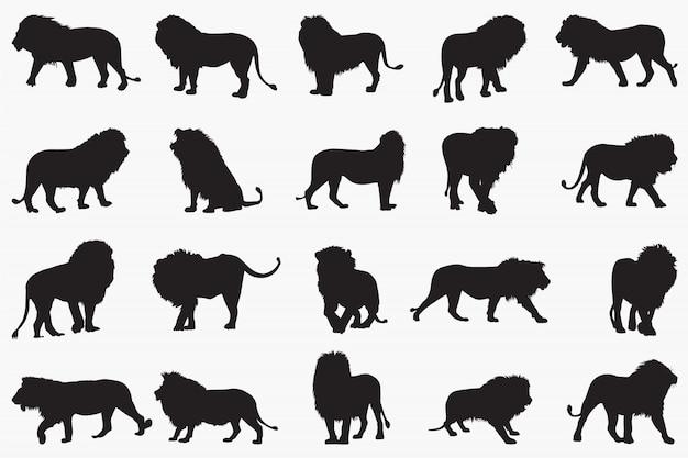 Silhouettes de lion