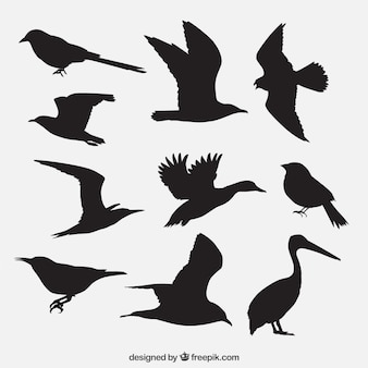 Silhouettes oiseaux emballent