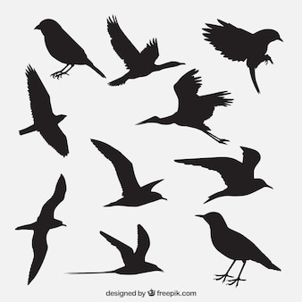 Silhouettes d'oiseaux emballent