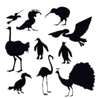 Silhouettes d'oiseaux exotiques