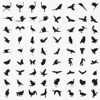 Silhouettes d'oiseaux