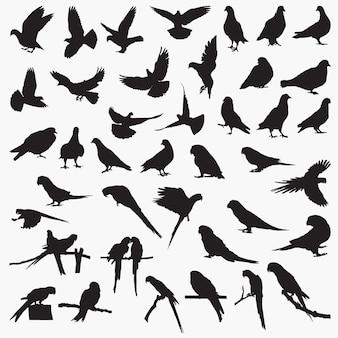 Silhouettes de perroquet de pigeon