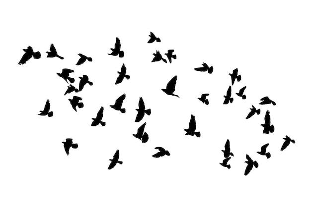 Silhouettes vectorielles d'oiseaux en vol isolé contour noir troupeau de pigeons de nombreux oiseaux différents