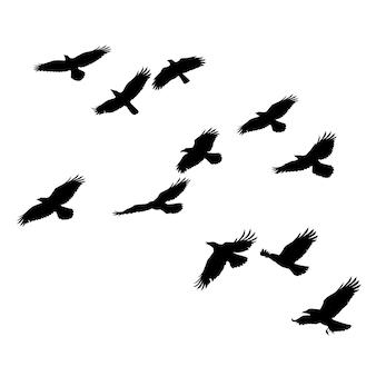 Silhouettes vectorielles d'oiseaux volants isolés contour noir de corbeaux