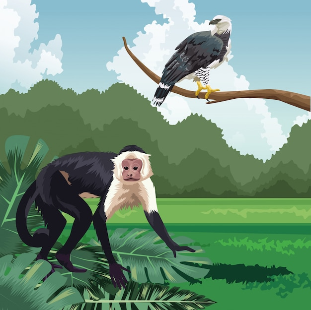 Singe et aigle sur branche paysage de faune et de flore tropicale