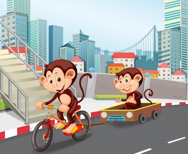 Singe à bicyclette en ville