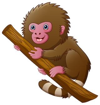 Singe macaque de dessin animé