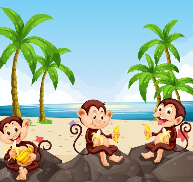 Singe mangeant de la banane à la plage