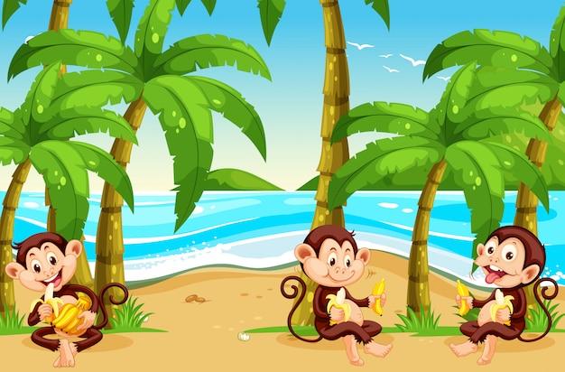 Singe à la plage