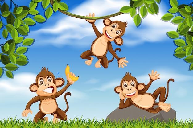 Singes effrontés dans la scène de la jungle