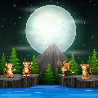 Singes heureux dans le paysage de nuit