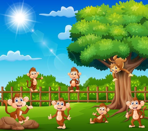 Les singes profitent de la nature près de la cage
