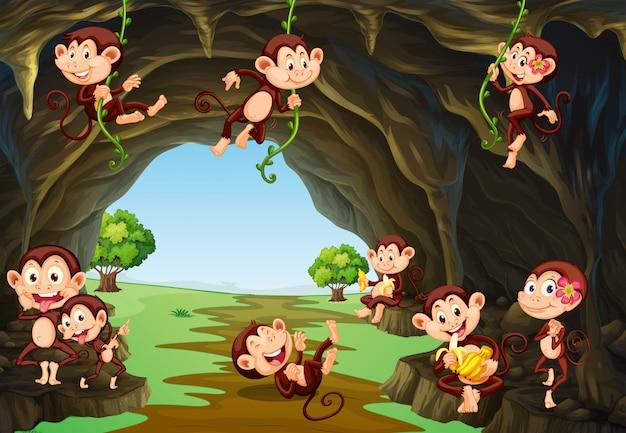 Singes vivant dans la grotte