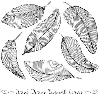 Six différentes feuilles de bananier dessinées à la main, sur un dessin tropical blanc