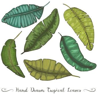Six feuilles de bananier dessinées à la main différentes, sur dessin tropical blanc