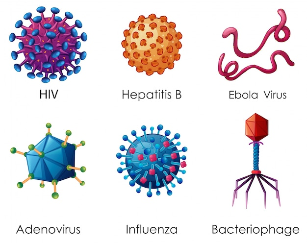 Six types de virus sur fond blanc