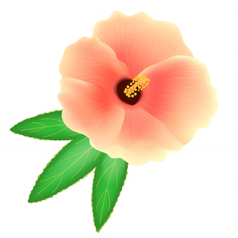 Soudan rose fleur sur fond blanc. roselle ou sabdariffa hibiscus. illustration réaliste. illustration vectorielle réaliste.