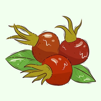 Source de vitamine c. illustration vectorielle. baies d'églantier. rose musquée mûre. dessin animé.