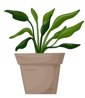 Spathiphyllum dans une plante décorative à la maison de pot sur un vecteur d'illustration de vecteur de fond blanc
