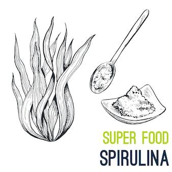 Spiruline. super nourriture dessinée à la main
