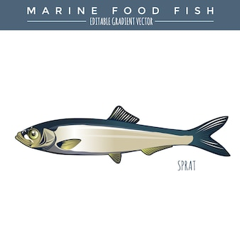 Sprat. poissons marins