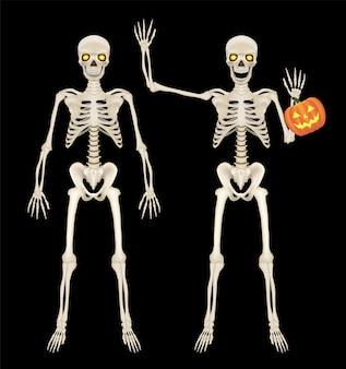 Squelette complet du corps sur fond noir
