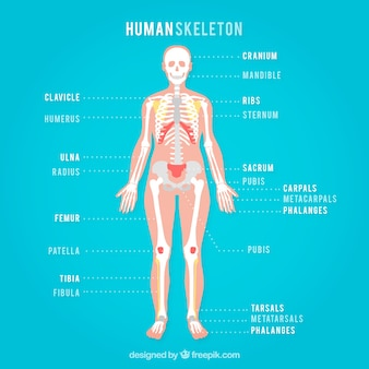 Squelette humain sur un fond bleu