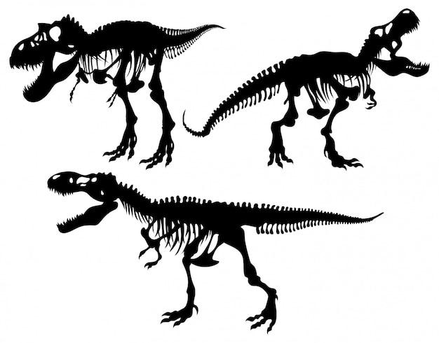 Le squelette d'un tyrannosaure prédateur. tyrex fort avec une bouche ouverte se dresse sur ses pattes postérieures