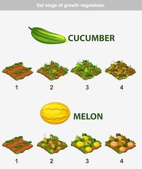 Stade de croissance des légumes. concombre et melon