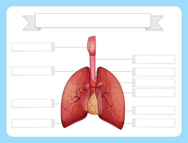 Structure du modèle de feuille de travail sur les poumons