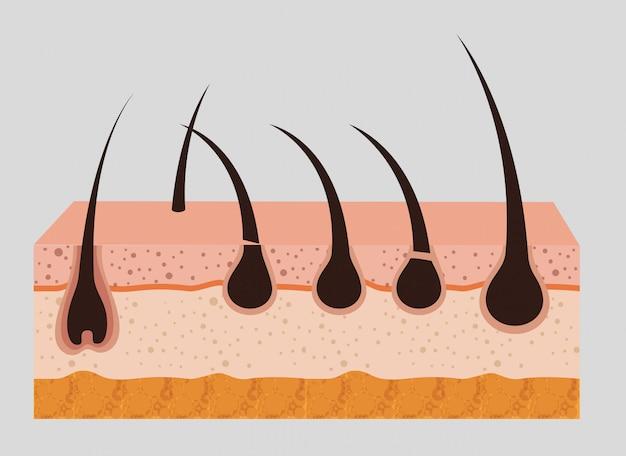 Structure de la peau en couches