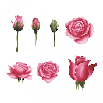 Style aquarelle rose rouge