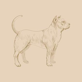 Style de dessin d'illustration de chien