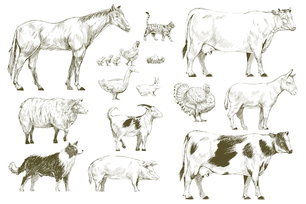 Style de dessin d'illustration de la collection d'animaux de ferme
