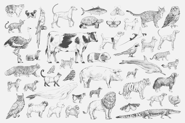 Style de dessin d'illustration de collection d'animaux