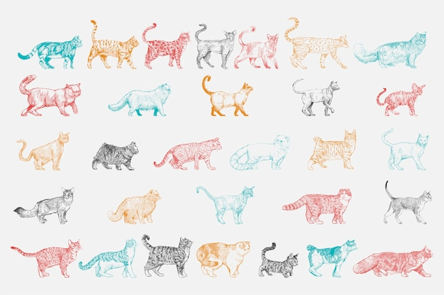 Style de dessin d'illustration de la collection de races de chats