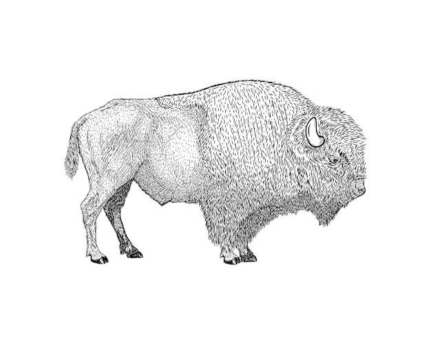Style dessiné à la main bison