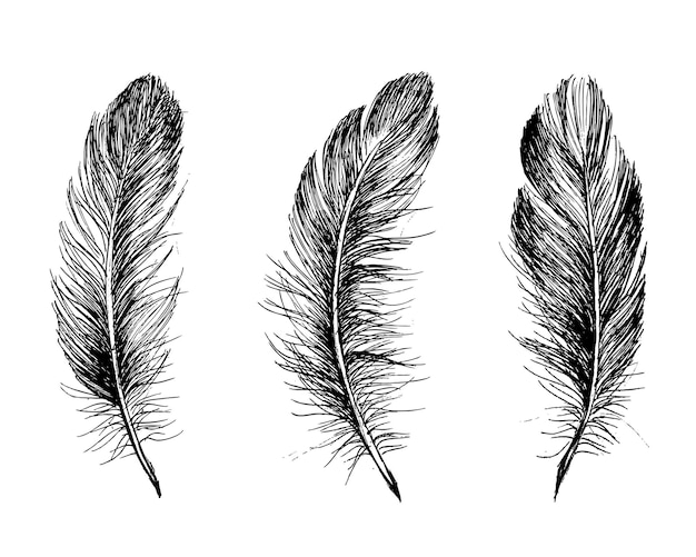 Style dessiné à la main de motif de plume
