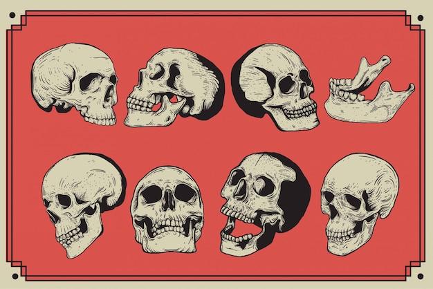 Style de gravure vintage crâne isolé illustration dessinée à la main.